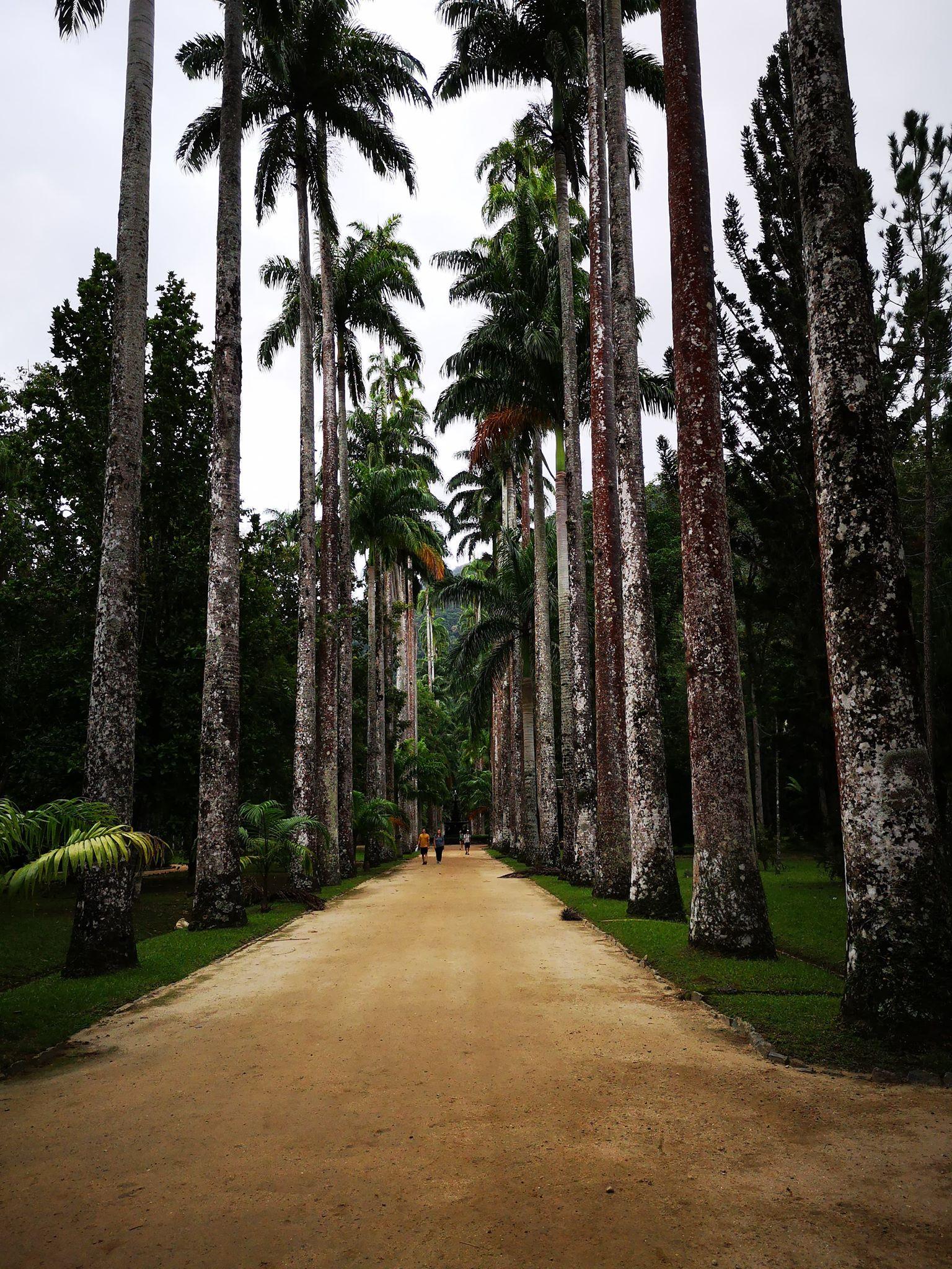 Le jardin botanique à Rio
