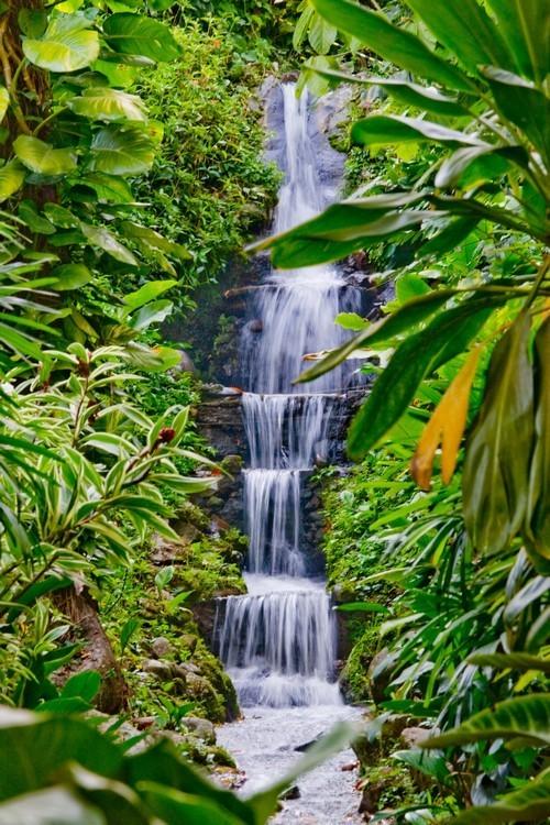 La forêt de Tijuca