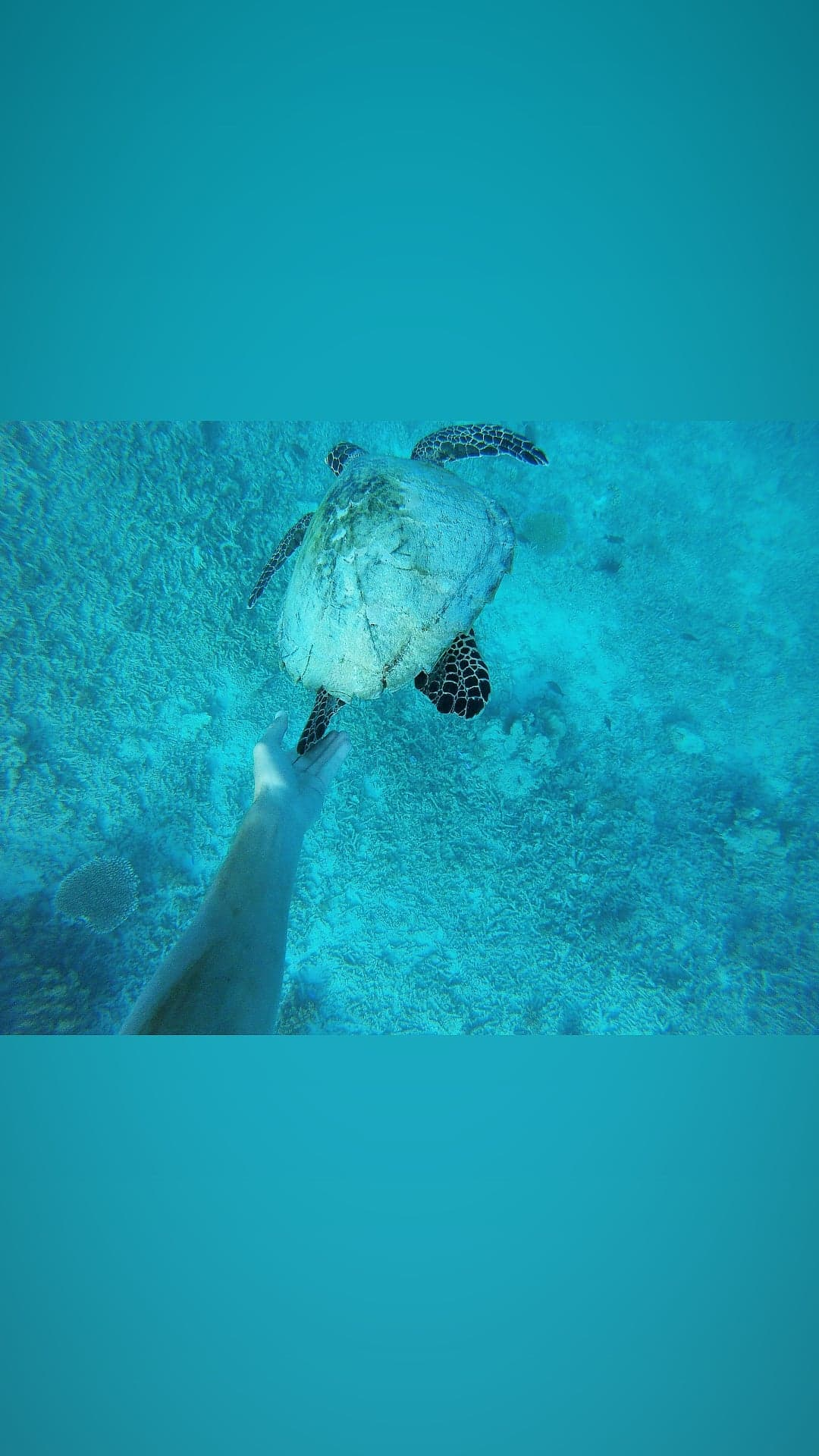 Snorkeling à Gili